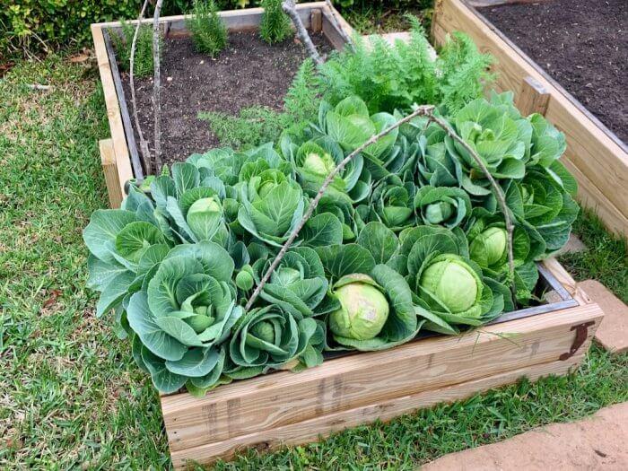 Manure Compost Soil Vegetable Garden Mix Houston, TX